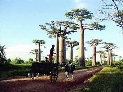 马达加斯加人和很多非洲国家的