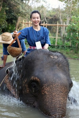 实拍美女陈数在泰国学习骑大象