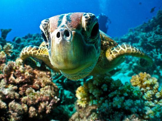 蜜月天堂凯恩斯 潜入水中与鱼儿共舞