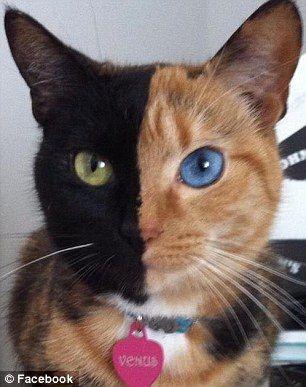 电猫接线方法图纸