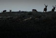 @七队巴顿:找不着北的麋鹿