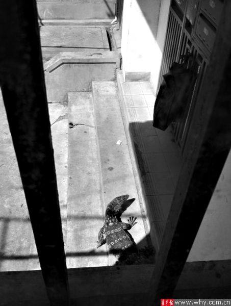 """小区居民被挡在房内出不了门。网友""""玄呀么玄""""图 图片来源:上海青年报"""