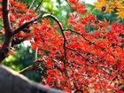 上海古漪园绝美秋色