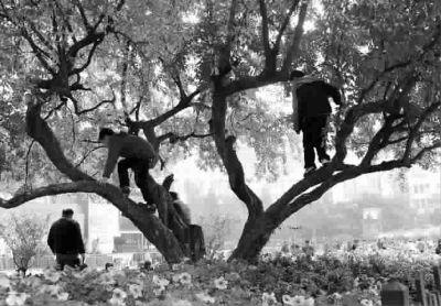 南京路步行街两个孩子爬上树玩耍家长不加制止
