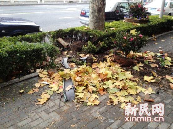 图说:在北京西路北侧718号门前的事故现场,一片低矮的灌木被撞得东倒西歪。在人行道和机动车道上,仍可看到不少碎玻璃和车身零部件。新民晚报·新民网记者 左妍 摄
