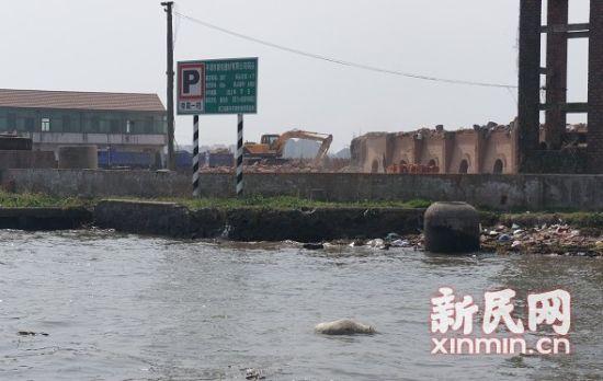 平湖境内河道也有死猪漂浮。图来源:松江环保局