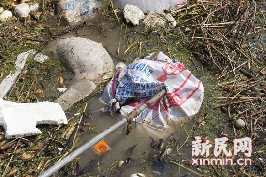 从松江事发水域一直到浙江平湖水泥厂上游,一路均可见到死猪。图来源:松江环保局