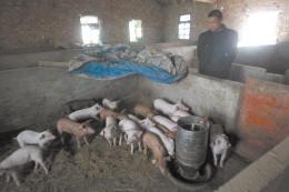 平湖市曹桥镇孔家堰村养殖户陆师傅家的养猪棚,养猪棚盖在居民楼后院,紧邻河道