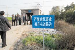 平湖市曹桥镇路边的病死猪池,附近养殖户来此处扔死猪