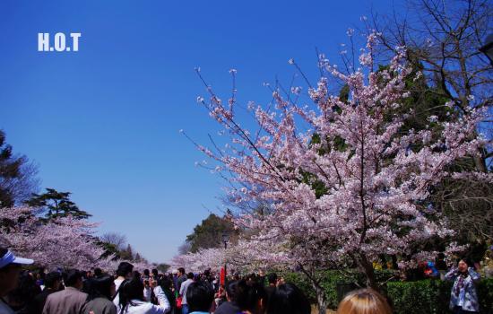 山东青岛旅游景点:中山公园