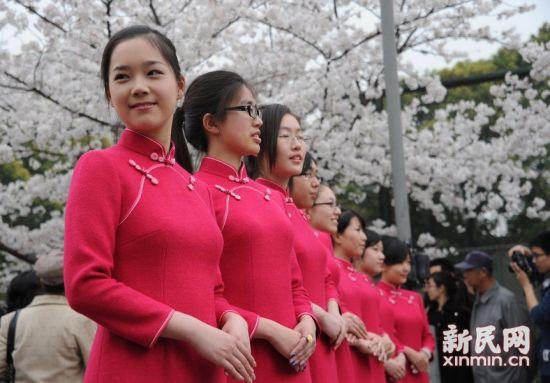 三月樱花 旗袍风采