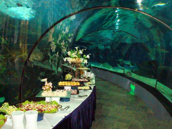 大洋海底世界(长风公园)美食 长风海洋世界鲨鱼隧道晚宴