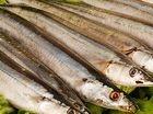 天价长江刀鱼暴跌教你美味刀鱼的简单做法