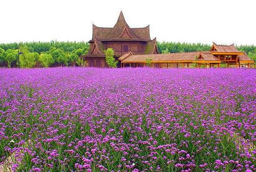 五一旅游去哪比较好 小长假上海周边景点推荐