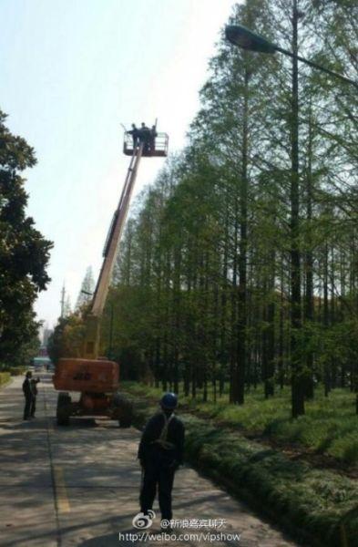 上海交大环卫工人捣鸟巢为杜绝H7N9进校园