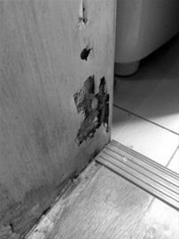 """居民家的护墙板已被""""散白蚁""""蛀得千疮百孔"""
