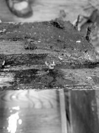 """地板下黑黑的""""蚁路""""清晰可见"""
