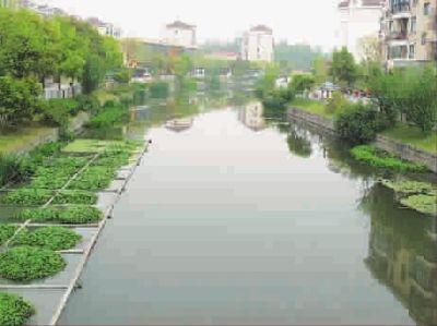 仙霞西路一小区景观河发黑冒泡恶臭刺鼻