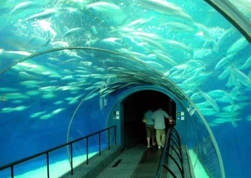 老虎滩极地海洋馆