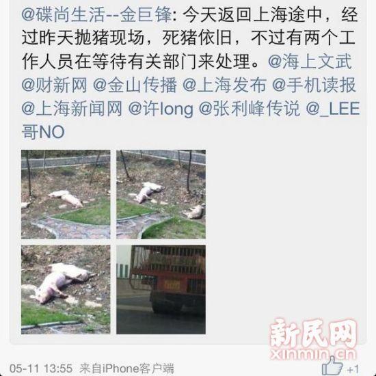 图说:从照片来看,被扔在绿化带的死猪至少有四头。 网友供图