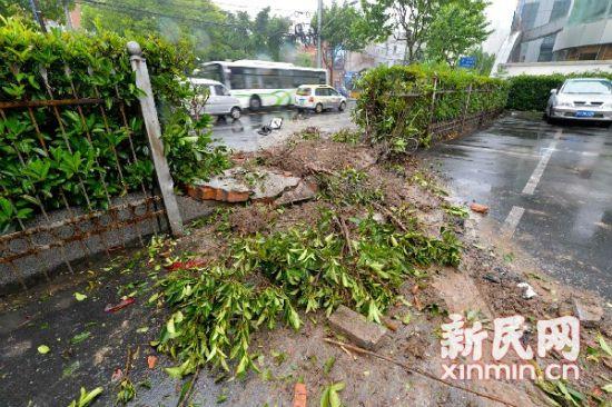 公交失控撞入小区,将绿化及围栏撞毁。新民晚报记者陈梦泽 摄