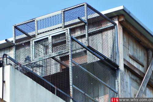 从下往上望去,鸽棚内的鸽子并不多,但是建在联排别墅顶楼的鸽棚显得非常突兀。本版摄影 记者 丁嘉