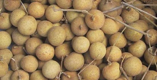 海南岛有哪些水果:菠萝蜜