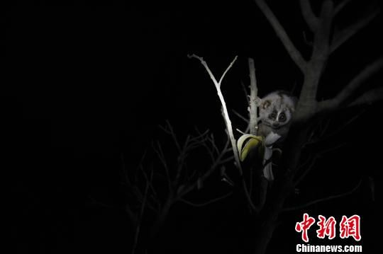 夜间动物园 史上首个探秘型动物园开放(5)