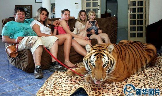 巴西土豪养老虎(图)(2)