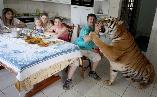巴西土豪养老虎(图)(4)