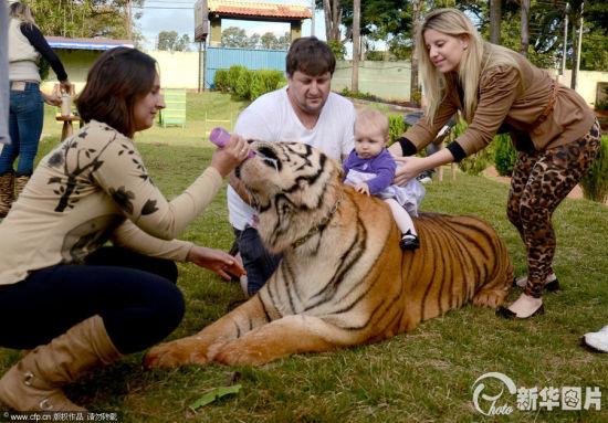 巴西土豪养老虎(图)(10)