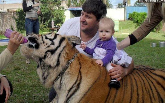 巴西土豪养老虎(图)