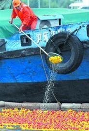 比赛结束后,专业机构对小黄鸭进行打捞。