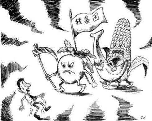 猪试吃转基因大米(图)_新浪上海_新浪网