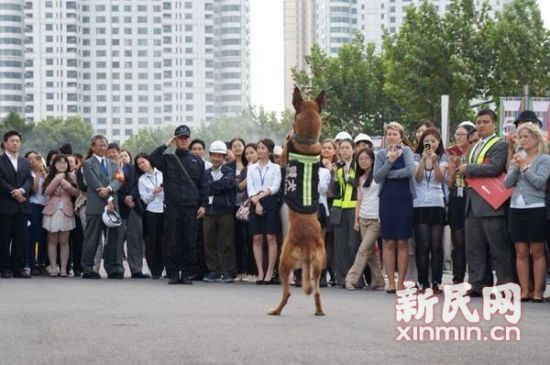 图说:这也是新上任的搜爆犬首次参加综合演练。上海环球金融中心供图
