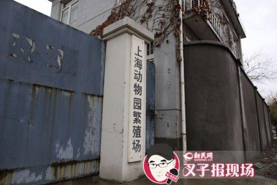 新民网记者赶到时,上海动物园繁殖场大门紧闭。新民网 记者 萧君玮 摄