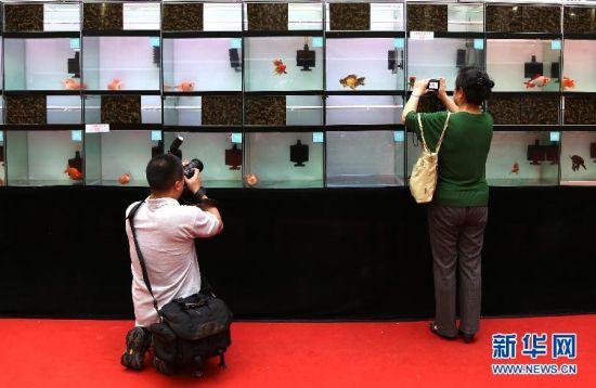 第八届上海国际休闲水族展开展
