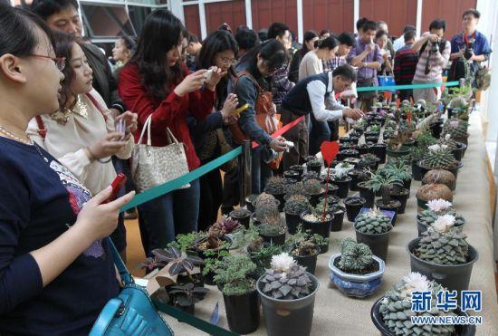 2013上海国际多肉植物展在沪举行