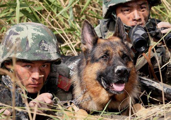 """置""""死地""""而后生——武警上海总队野战生存训练纪实"""