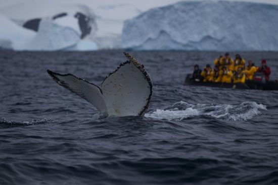 去南极旅游必知的21件事:企鹅等动物