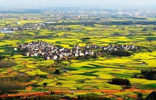 盘点全国13处绝美的油菜花观赏地上海奉贤上榜
