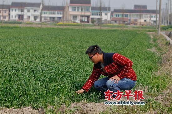 3月17日,阮凯峰查看自家农田,他是松江区最年轻的家庭农场主。 早报记者 张栋 图