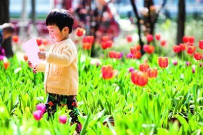 昨日天气晴好,不少市民一家出门赏花踏青。 /晨报记者 杨眉