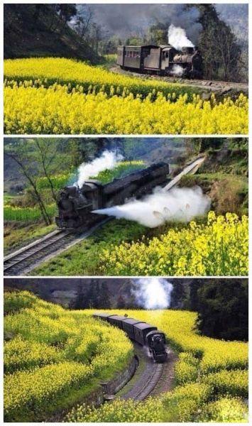 那些国内外有名的观光小火车