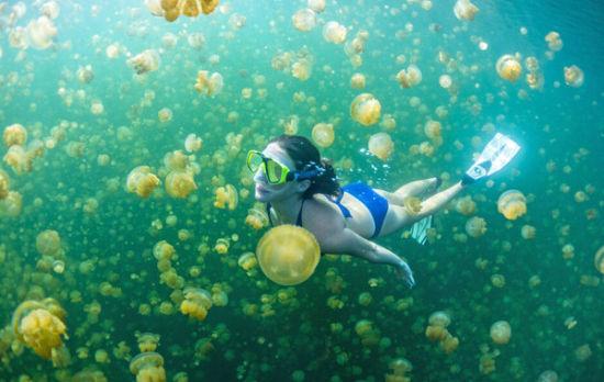 壁纸 海底 海底世界 海洋馆 水族馆 550_348