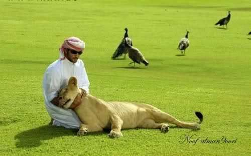 揭秘迪拜王族成员的奢华生活照