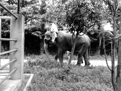 4头老挝亚洲象入住上海野生动物园