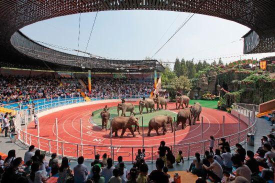 """群象领衔 上海野生动物园大种群动物""""十一""""齐亮相"""