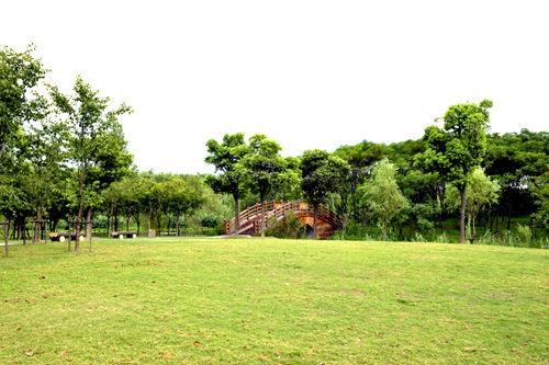 顾村公园景点介绍——森林漫步园