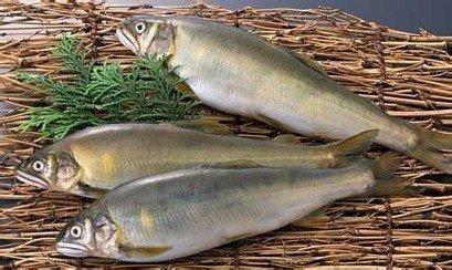 鱼黑衣不能吃